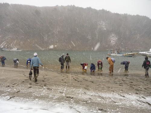 牡鹿半島の鮫浦でボランティア(援人号) Volunteer at Oshika Peninsula, Miyagi pref. Deeply Affected by the Tsunami of Tohoku Earthquake