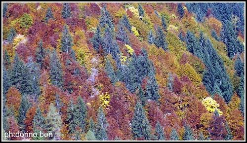 I colori della Val Pesarina.