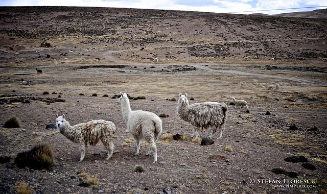 KLR 650 Trip Peru and Bolivia 408