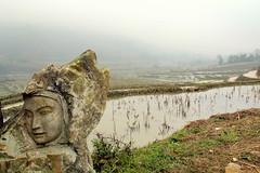 Water Logged Rice Paddies