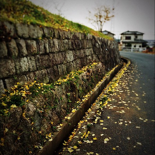落ち葉の季節  #iphonography #instagram #iphone4s