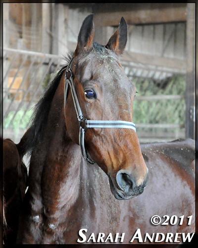 Abercrombie 2004-2012