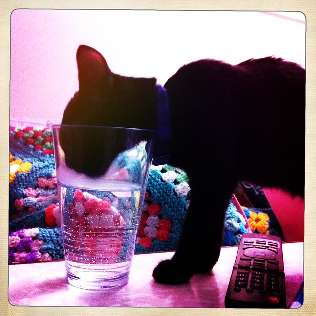 min-o glass drinker