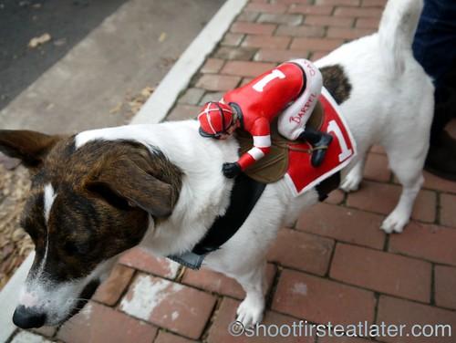 dog jockey-1