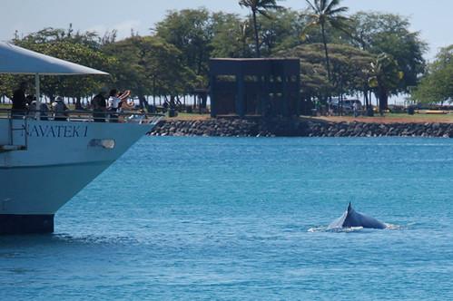 Navatek and whale