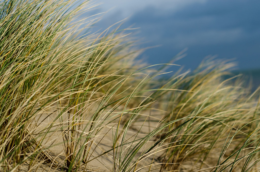 Curracloe grass