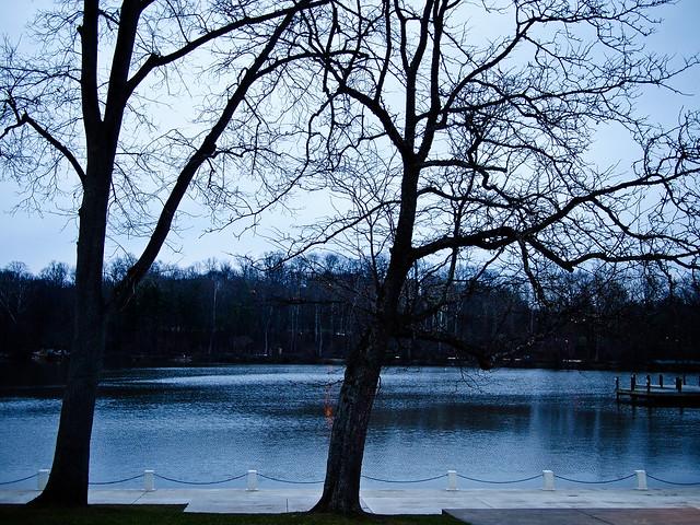 Trees adorning the lake