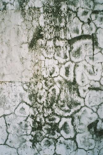 rotten wall