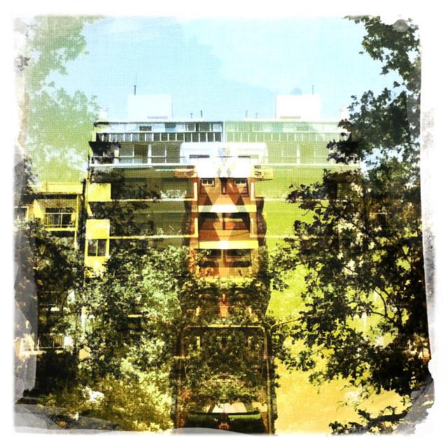 Árboles y edificios