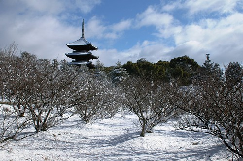 Snowy Cherry Trees & The Five-Storied Pagoda