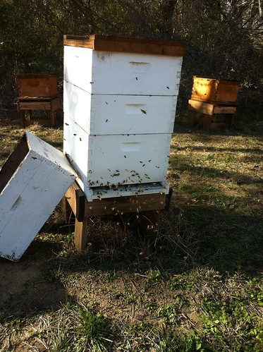 Healthy winter hive