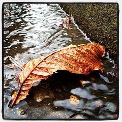 Upturned Leaf Boat