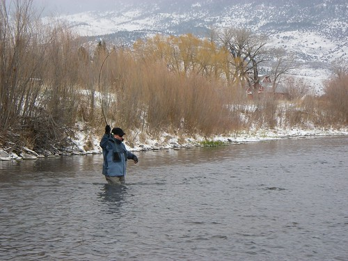 Landing a Trout on Armstrong's Spring Creek on a Snowy Day