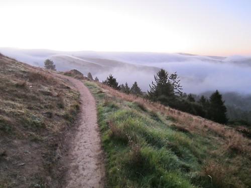 The Sun Trail, Muir Woods below