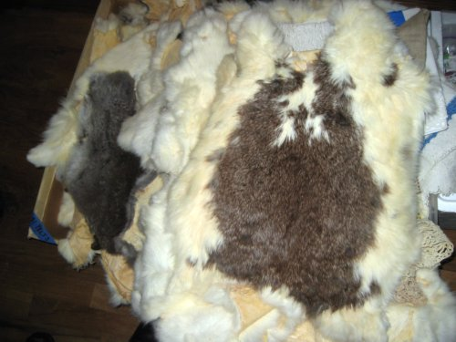 Some of the 267 rabbit pelts