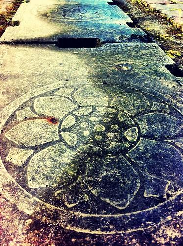 地上浮現的蓮花