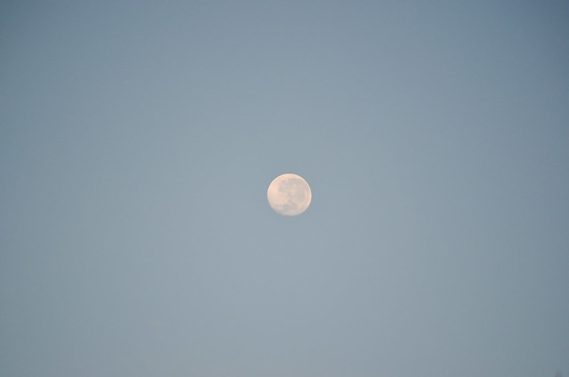 Morning moon-1