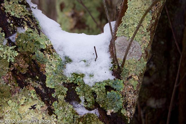 2012_Jan_17_January Snow_062