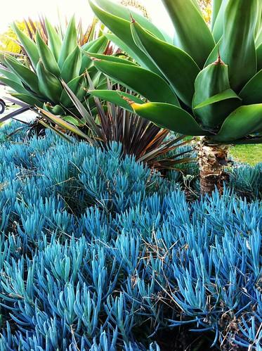 28/366: Succulents by juanita805