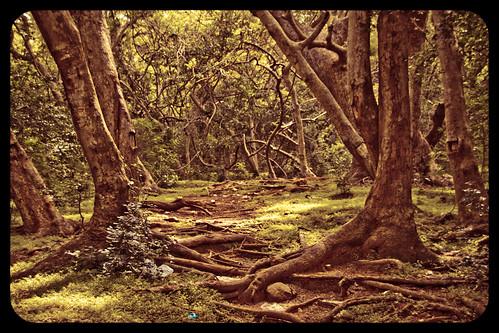 The unexplored jungle  by Varnajaalam @ Rajanna