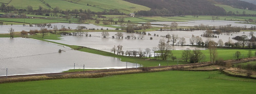 Airedale in Flood