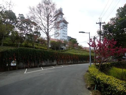 2012東勢林場櫻花13