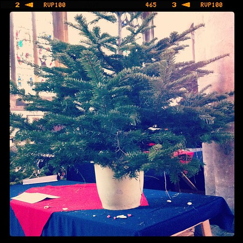 One undecorated tree. Christmas tree festival over for another year.