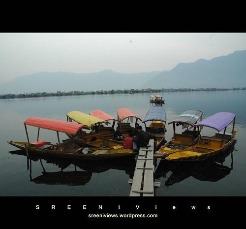 Shikaraflower, Srinagar, Kashmir, India