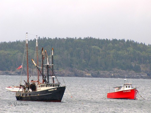 Fishing Boats in Bar Harbor
