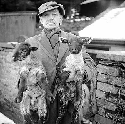 Man with New Year twin lambs