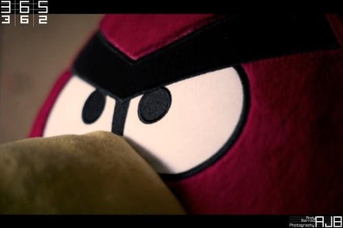 362/365 So Angry