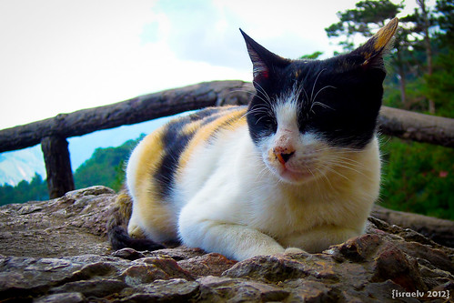 Mountain Cat by israelv