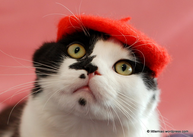 red beret 2-5-2012 3-15-60