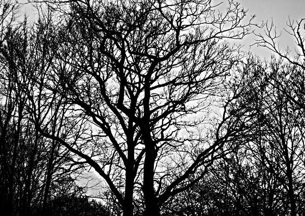 L'ombre des arbres