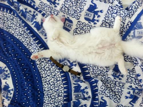 Gesso sleeping upsidedown