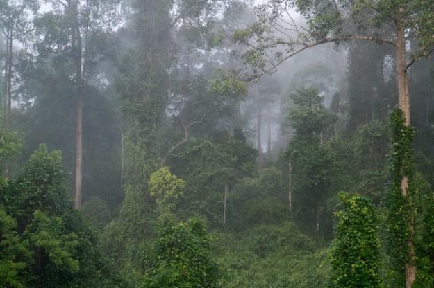 Morning mist. Danum Valley