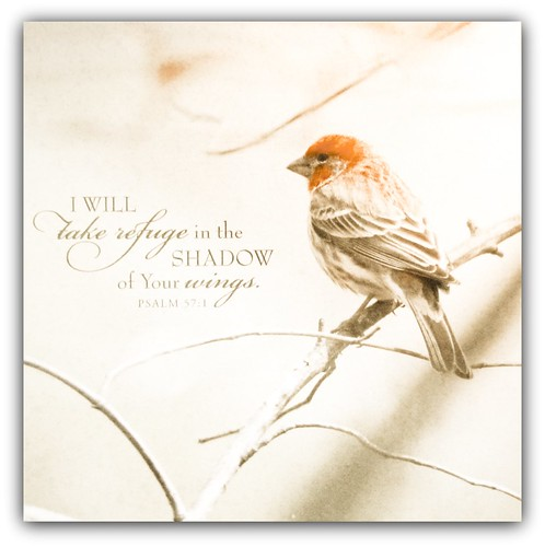 """""""I will take refuge in the shadow of Your wings."""" Psm. 57:1 by Child of the King Photography-Beckie"""