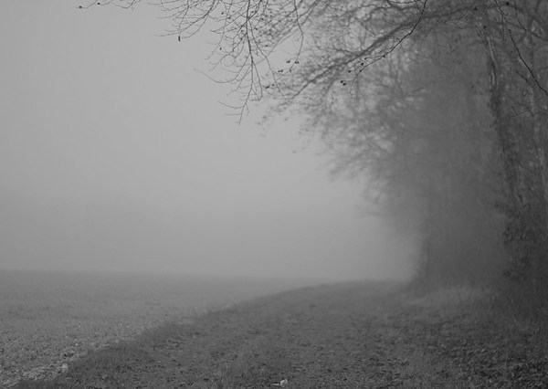Bois dans le brouillard