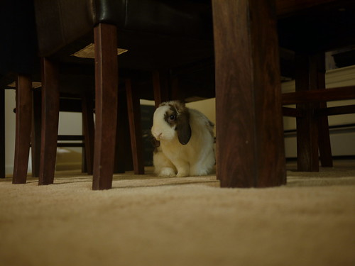 betsy under the table, up to no good