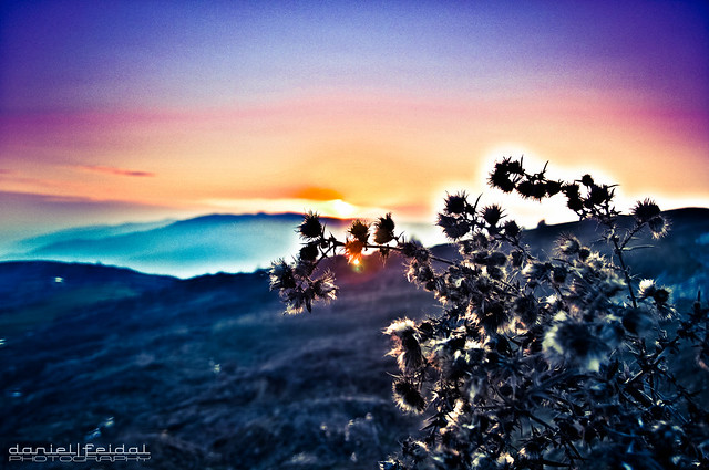 Visions of Azerbaijan.Sunset on thistles