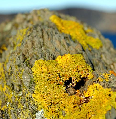 lichen2