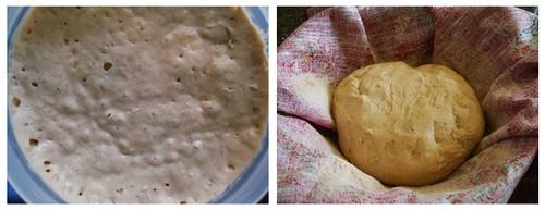 starter and dough