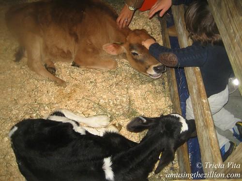 Ronnybrook Calves