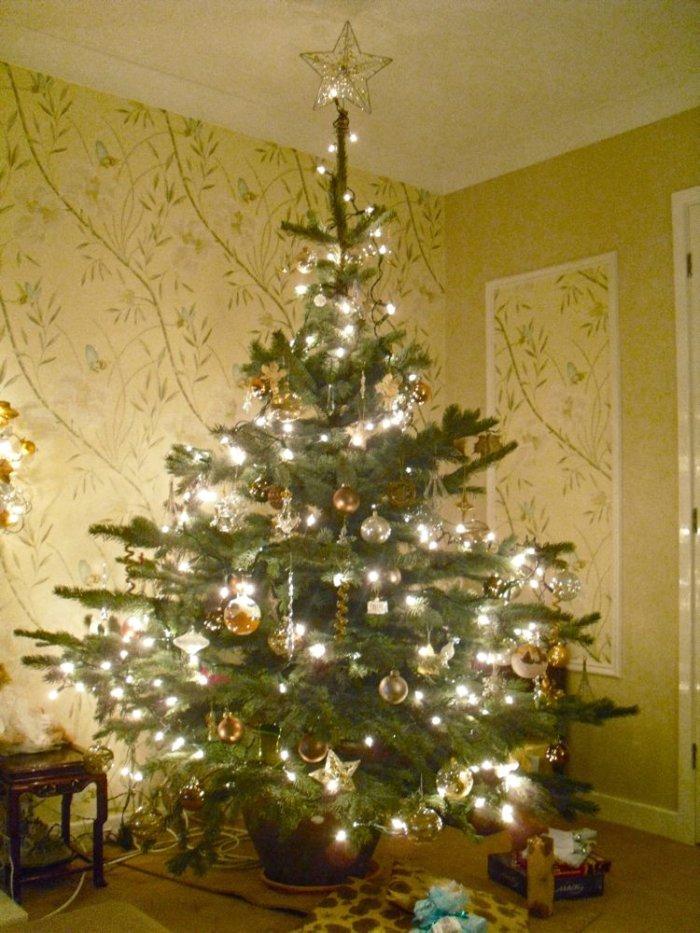 katie's_tree_2011