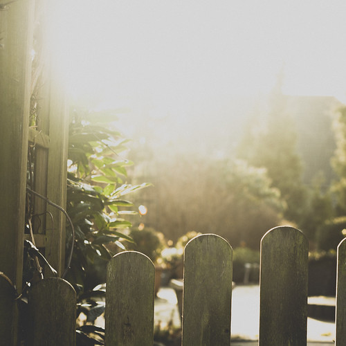 fence in the light