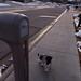 Dogwalk, January 23, 2012