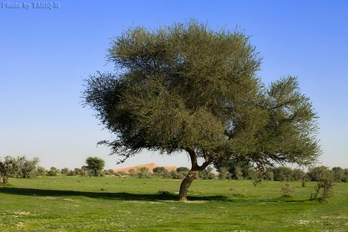 Green Desert by TARIQ-M
