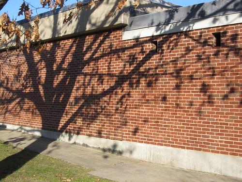 Oak tree shadow