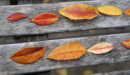 Leaves_d