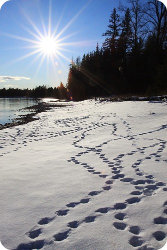 duck footprints by littlehippiegirl